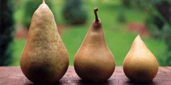 Perele - beneficii pentru sanatate, compozitie, calorii
